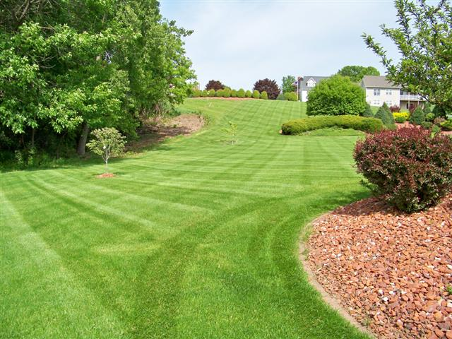 Very Beautiful Lawn with Lush Green Grass