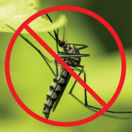 mosquito 1.png